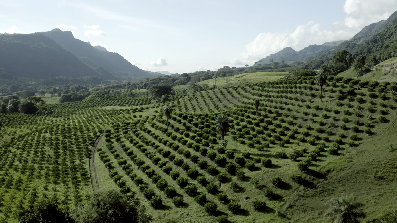 Agricultural Potential in Colombia
