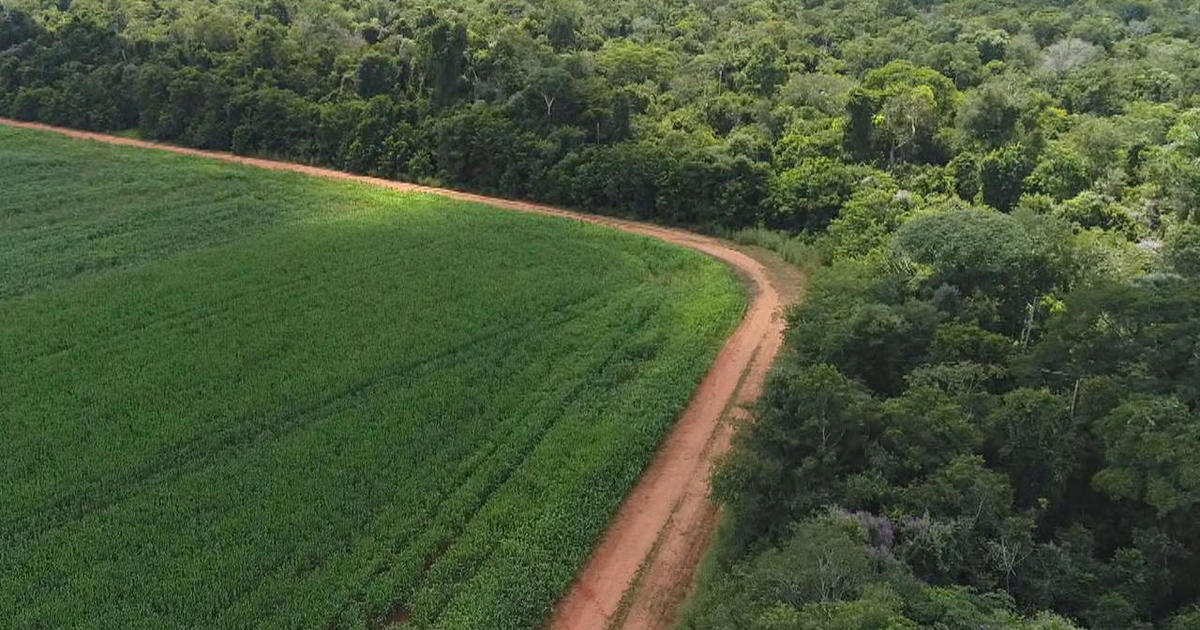 Agricultural Potential in Brazil