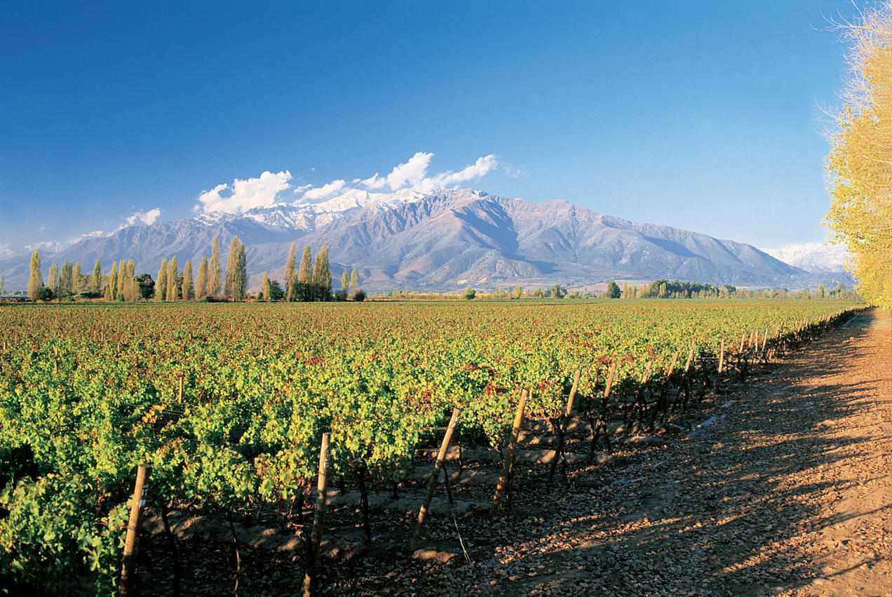 Agricultural Potential in Chile